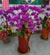 10株蝴蝶蘭盆栽